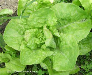 Salat im Juni
