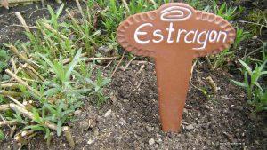 Estragon im Frühling